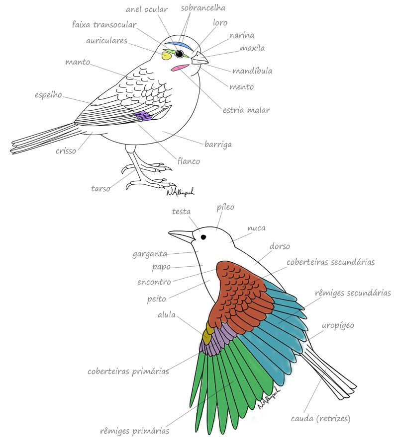 morfologia das aves